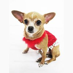 Santa Claus fancy dog dresses fashionable pet clothing. This Christmas dog costume is handmade crocheted with red color and attached with snowflake apparel at the back of the dresses. Designed and handmade crocheted by Myknitt Designer Dog Clothes. Custom pet clothes are welcome. Please