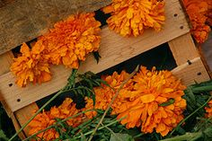 The Marigold is the traditional flower used to honor the dead, its colored like the sun to represent life and hope.
