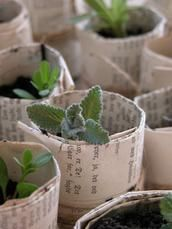 use old newspaper to wrap small plants for root starter pots.