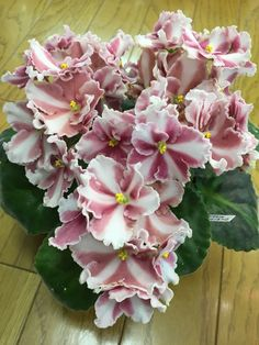 """""""Rockin' Romance"""" African Violet makes a beautiful Valentines Day gift. Include care tips found here: https://www.houseplant411.com/houseplant/african-violet-how-to-grow-care"""