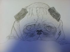 My pug drawing :)