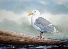 Seagull Canvas Print by James Williamson. All canvas prints are professionally printed, assembled, and shipped within 3 - 4 business days and delivered ready-to-hang on your wall. Choose from multiple print sizes, border colors, and canvas materials. Watercolor Bird, Watercolor Animals, Watercolor Paintings, Watercolors, Canvas Art, Canvas Prints, Art Prints, Easy Paintings, Bird Paintings