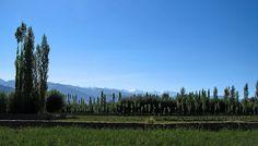 Ladakh Summer Photo Credits: wildxplorer/Flickr http://bit.ly/1ihE4u7