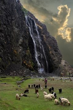 WATERFALL, GREEN FIELD, SHEEP