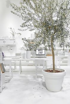 Wondering here if I could keep big Olive tree alive in my new Styling&Photo Studio. Love this stand with the tree from this year Milan Design Week 2017, Bunny Room, Coffee Shop Design, White Rooms, Shades Of White, White Decor, Office Interiors, Scandinavian Style, Studio