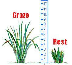 Pasture plant height