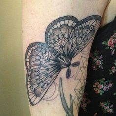 Love this butterfly.
