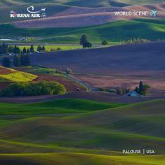 [World Scene] The colorful and breathtaking landscape of Palouse, Washington, USA. #KoreanAir