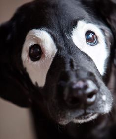 Heyyyyyyyy!! 😄 Check out my recent story on the American Vitiligo Research Foundation website! And support! ❤️ www.avrf.org  Amazing Photo Credit: @saycheesedog  #avrf #saycheesedog #ellendegeneres #theellenshow #kids #keepportlandrowdy #dogs #dogstagram #nonprofit #dogsofinstaworld #handsomeboy #raiseawareness #stopbullying #different #support #goals #nocuredontcare #vitiligo #vitiligonation #vitiligoworld #vitiligopride #vitiligobeauty #vitiligonation
