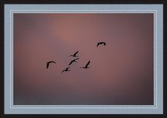 Sandhill Print featuring the photograph Cranes Heading To Roost by Jeff…