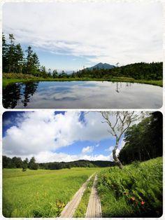 ☆共和AMEL日本の四季☆  福島・群馬県の境にある尾瀬ヶ原と 尾瀬沼。 標高1,400m東西6km、南北2kmに 及ぶ尾瀬ヶ原、季節を彩る草花が 美しく咲き乱れ、ホタルの群生、夜空に かかる天の川などなど、都会では 見られない風景を満喫できます。 昔の童謡を思い出しました!  夏が来れば、思い出すはるかな尾瀬とおい空 霧の中にうかびくる優しい影、 野の小径、水芭蕉の花が咲いている夢見て 咲いている水のほとり、しゃくなげ色に たそがれるはるかな尾瀬とおい空。  [共和薬品工業URL] http://www.kyowayakuhin.co.jp/