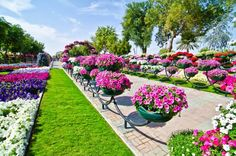 Al Ain Paradise', a stunningly beautiful display of hanging flower baskets right on the edge of the desert