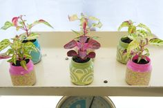 """Pretty Little Baby Food Jar Planters. """"The gifts for all the guests were decorated baby food jars with plants inside. When these little guys get planted in the ground I'm hoping they will remind everyone of these sweet little girls."""""""