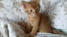 Roter kater in Bayern - Fünfstetten Cats, Animals, Bavaria, Gatos, Animales, Animaux, Animal, Cat, Animais