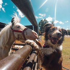 Tiro al Blanco helping his pal Finn get through #Humpday. Tiro is a pony who helps both children and animals with behavioral issues at an animal-assisted therapy farm in Mexico. Way to go, Tiro! #: @vivirconperros #GoPro #BEAHERO