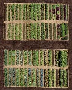 Martha Stewart's vegetable garden layout. The major cross-axial paths are 10 feet wide and can accommodate a garden cart or a pickup truck. Each row of vegetables is 30 inches wide, and the paths between them are 12 inches wide, which makes it simple to hoe and weed from both sides. To minimize weeds and retain moisture, each row is mulched with salt hay, a grass harvested in marshes along the East Coast that contains no weed seeds.
