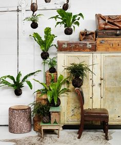Gypsy by Sibella Court. Indoor plants and cactus. An assortment of different house plants and foliage. Green rooms and rooms with plants.