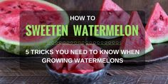 Gardening Composting How To Sweeten A Watermelon? 5 Tricks You Need To Know When Growing Watermelons - Beat the heat with a yummy watermelon. Don't just bite it, but learn the tricks in growing and how to sweeten watermelon!