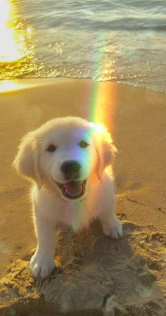 puppies on beach - puppies on beach . puppies at the beach . cute puppies at the beach . cute puppies on beach . cute puppies golden retriever the beach Super Cute Puppies, Cute Baby Dogs, Cute Little Puppies, Cute Dogs And Puppies, Cute Little Animals, Cute Funny Animals, Super Cute Animals, Doggies, Funny Dogs