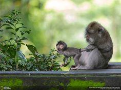 Animali: Cuore di mamma Fotografia di Julia Wimmerlin