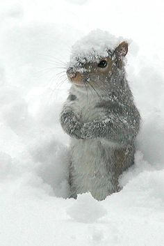 ... yes, it's here! S N O W . . . Don't forget to help out your little buddy's, it is hard to find food with so much snow :)