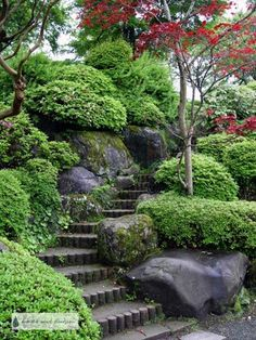 Winding steps though boulders and pruned shrubs