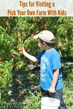 Tips for Visiting a Pick Your Own Farm With Kids