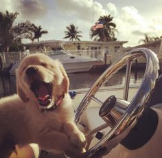 Wealthy Puppy Tires of Yacht, Shiny Toys