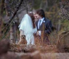 Wedding Picture Photobombs