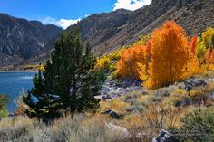 The Fire Trees of Grant Lake