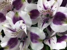 purple alstroemeria wedding bouquet - Google Search