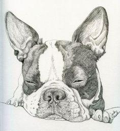 Boston Terrier Pet Dog Art Original Drawing 8 x 9 -Carla Smale by carla smale