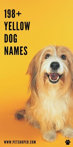 Great name list for your yellow dog! Yellow dog names like Goldy, Sunshine, Sunny, Honey, Dusty, Penny, Cooper, Mango, Tanner, Amber and more! #YellowDogNames #LabNames #DogNames