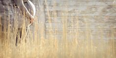 www.frostedproductions.com | #utah #photographer #maternity #photography #baby #bump #golden #grass #sunshine