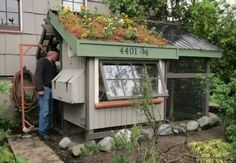 #chickencoop #greenroof #homestead #urbanfarm #offthegrid
