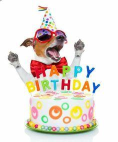 Jack Russell happy birthday