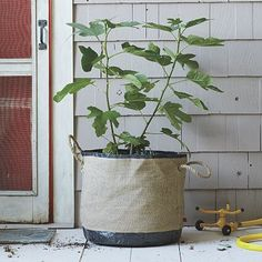 "Bag Planters - 14"" Bag, reg 49 sale $19.99 -- ""The portable planter. Designed for small outdoor spaces and easy storage, this burlap and tarpaulin Bag Planter allows air circulation and gradual water drainage. The medium size works well for tomatoes and small plants or trees."" 16"" diameter x 14"" high."