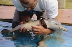 Art Dolphins are so cute! Especially baby dolphins pets-animals-and-the-bizarre So Cute Baby, Cute Babies, Cute Animal Photos, Cute Animal Videos, Animal Pictures, Baby Pictures, Beautiful Creatures, Animals Beautiful, Animals Amazing