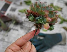How To: Wire Succulents for Your Holiday Flowers
