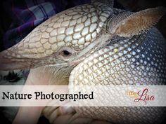 Photographs of Armadillo, Florida Soft Shell Turtle, Rabbit #Photography @Lisa Samples