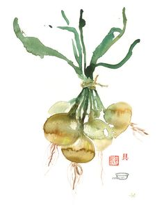 """Yellow onions Archival giclee reproduction print from my watercolor illustration. Printed on fine art """" BFK Rives """" hot-pressed paper, smooth surface, 140 lb, cotton (acid fre Watercolor Fruit, Watercolor Paintings, Watercolours, Watercolor Illustration, Vegetable Prints, Illustration Botanique, Kitchen Art, Kitchen Decor, Fruit Art"""