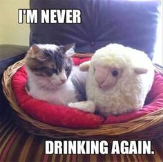 15 Funny Cats Attack This Week.