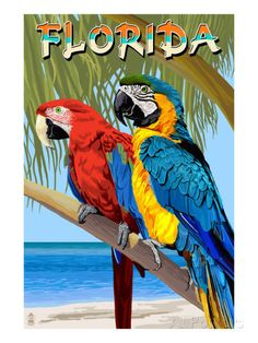 Florida Keys Key West Parrot Bird United States Travel Art Advertisement Poster
