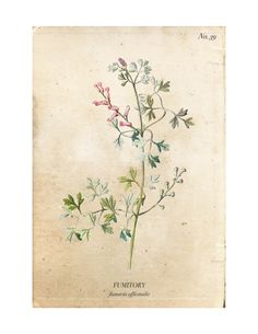 A set of four vintage wild flower botanical prints are an easy way to add charm and character to any home. Download them for free at www.aburstofbeautiful.com