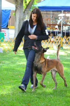 Schutzhund Obedience