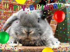 Happy Birthday to Us! Happy Birthday Hase, Happy Birthday Doodles, Cool Happy Birthday Images, Belated Birthday Wishes, Bunny Birthday, Happy Birthday To Us, Happy Birthday Quotes, Happy Birthday Greetings, Animal Birthday