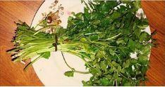 Esta hierba sana los riñones, páncreas, hígado, pulmones, entre otras enfermedades mas. recuerda cuidar nuestra naturaleza por que gracias a ella obtenemos...