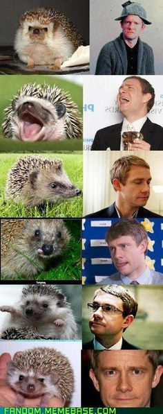 If Cumberbatch is an Otter then it looks like Freeman is a hedgehog.