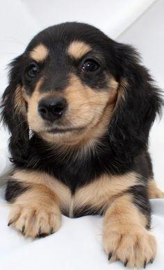 Dog Training Landisville Pa