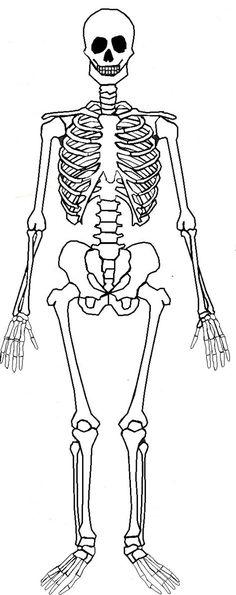 Montessori nomenclature FREE human skeleton 3 part cards & book - Tarjetas… Human Body Bones, Human Body Anatomy, Human Skeleton For Kids, Skeleton Parts, Science For Kids, Science And Nature, Skeleton Template, Montessori Science, Preschool